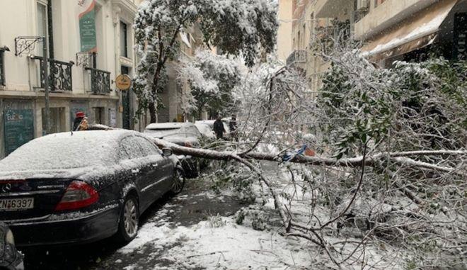 Κακοκαιρία Μήδεια - Πτώση δέντρου στην οδό Νίκης στο κέντρο της Αθήνας