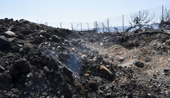 Το οικόπεδο στην περιοχή Μάτι όπου βρέθηκαν νεκροί 26 άνθρωποι