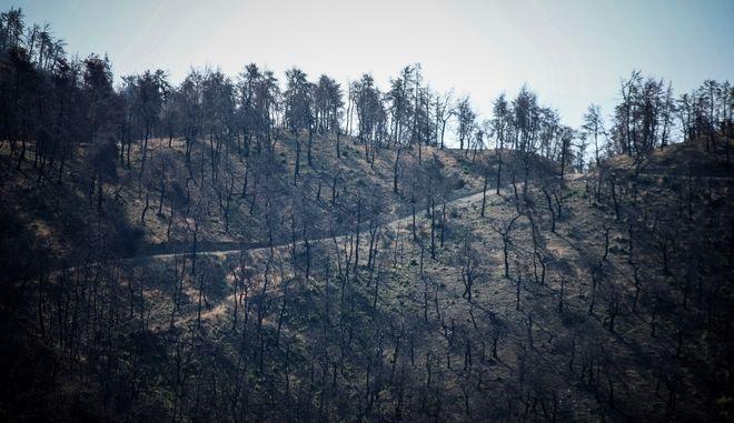 Καμμένο δάσος στην Εύβοια