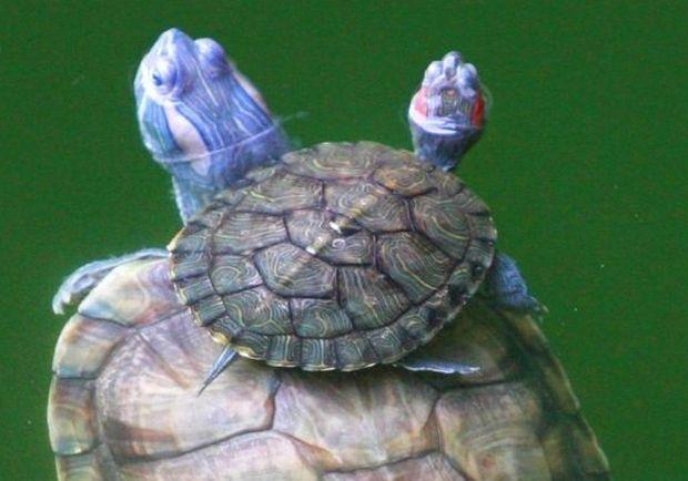 Φωτογραφίες: Όταν τα ζωάκια μαθαίνουν να κολυμπάνε