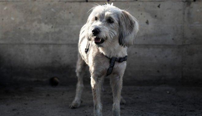 Σκυλί στη Νίκαια