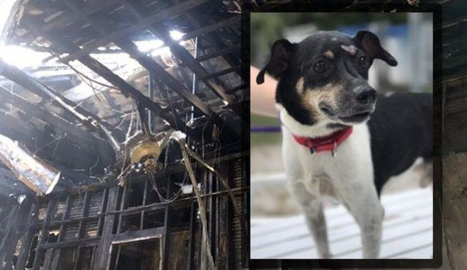 Σκύλος έσωσε οικογένεια από φωτιά στη Φλόριντα