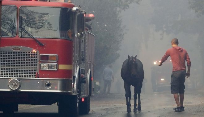 A man tries to get a hand on a horse that got loose during wildfire in the Lake View Terrace area of Los Angeles, Tuesday, Dec. 5, 2017. (AP Photo/Chris Carlson)