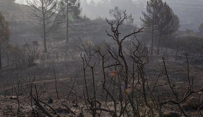 Μεγάλη φωτιά κοντά στην κοινότητα Τόρε δελ Εσπανιόλ στην περιοχή της Καταλονίας
