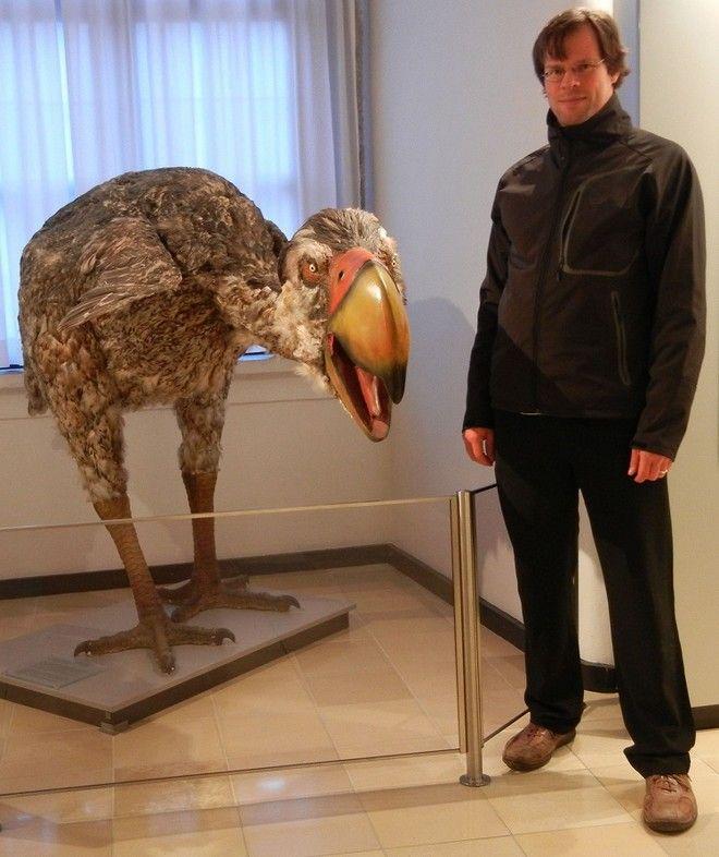 το μεγαλύτερο πουλί τέρας