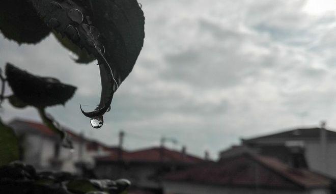 Σταγόνα βροχής στην άκρη ενός φύλλου τριανταφυλλιάς κατά την διάρκεια βροχόπτωσης