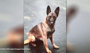 Επική γκάφα: Άνθρωπος δάγκωσε σκύλο! Μόνο που ήταν της αστυνομίας...