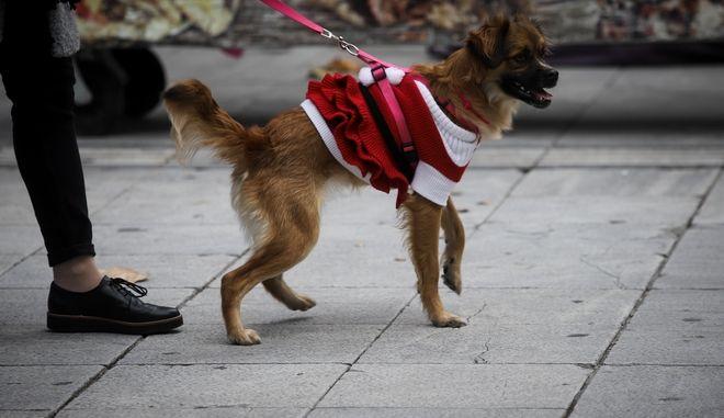 Ντυμένος σκύλος για να αντιμετωπίσει το κρύο των ημερών