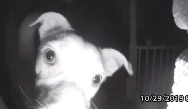 Το σκυλί την ώρα που χτυπάει το κουδούνι για να μπει μέσα στο σπίτι