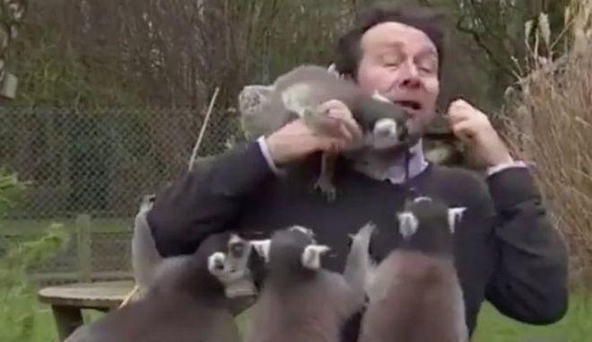 Άνθρωπος εναντίον λεμούριων: Όταν δημοσιογράφος μεταδίδει live από ζωολογικό κήπο