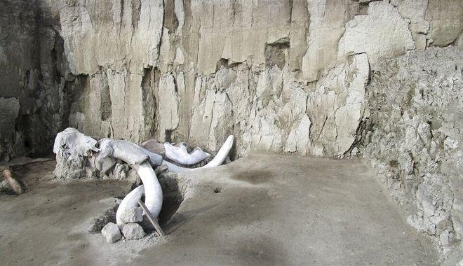 Κόκαλα από μαμούθ εντοπίζονται μετά από εκσκαφές στο Μεξικό