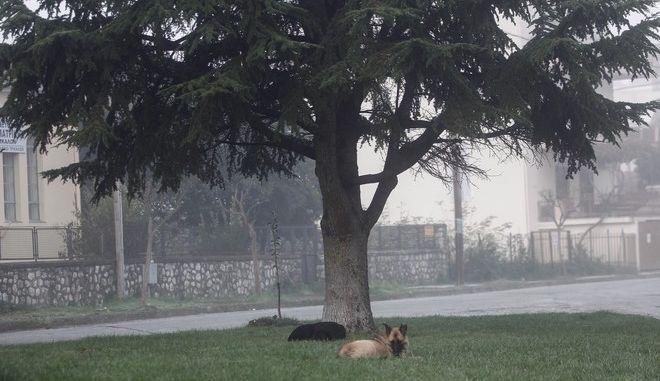 Αδέσποτα σκυλιά είναι ξαπλωμένα κάτω από δέντρο στην πόλη των Τρικάλων