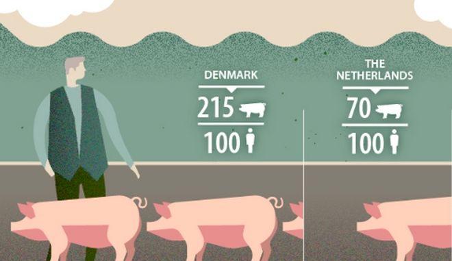 Πόσα γουρούνια αντιστοιχούν για κάθε άνθρωπο στην Ελλάδα