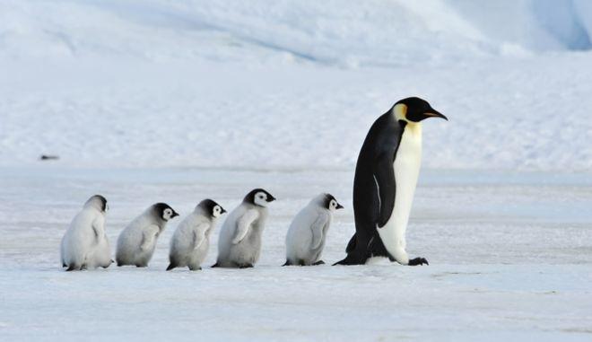 Πιγκουίνοι στην Ανταρκτική