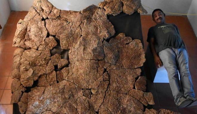 ΗΠΑ: Απολιθώματα θαλάσσιας χελώνας σε μέγεθος αυτοκινήτου