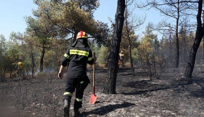 Στιγμιότυπο από φωτιά στο δάσος του Σέιχ Σου