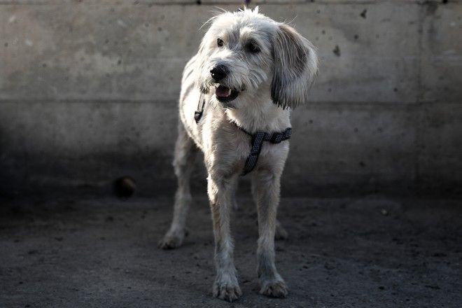 Το σκυλάκι της οικογένειας που σώθηκε στον Μώλο Δραπετσώνας
