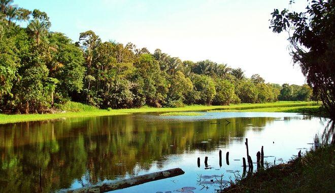 Βραζιλία: Το δάσος του Αμαζονίου εκπέμπει SOS
