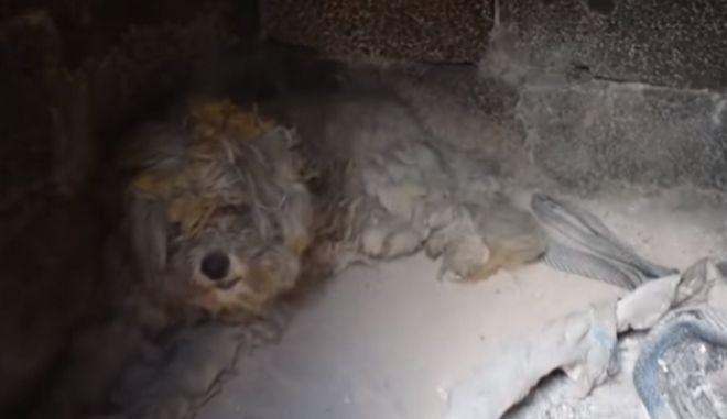 Τι απέγινε ο σκύλος που βρέθηκε σε φούρνο στο Μάτι