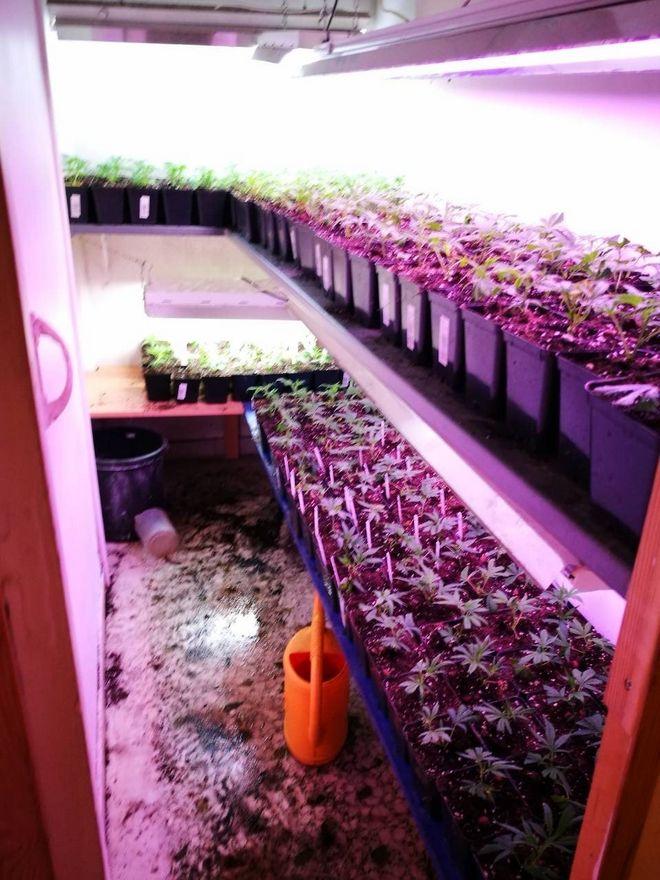 Πλήρως οργανωμένο εργαστήριο υδροπονικής καλλιέργειας κάνναβης σε σπίτι στην Καλλιθέα