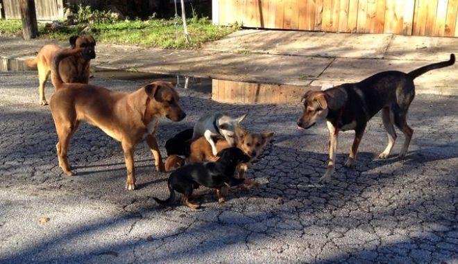 Πρόεδρος φιλοζωικής οργάνωσης κατηγορείται για την εξόντωση 2.000 σκυλιών και γατιών