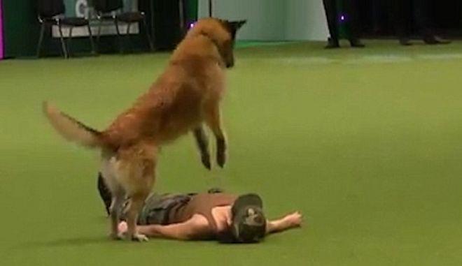 Βίντεο: Σκύλος κάνει τεχνητή αναπνοή και δίνει το φιλί της ζωής