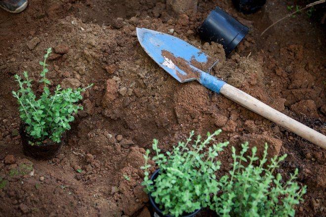 Η μεταμόρφωση του κήπου σου με απλά βήματα