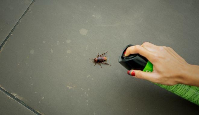Τι μπορούν να σου προκαλέσουν οι κατσαρίδες - Το πρόβλημα της Θεσσαλονίκης