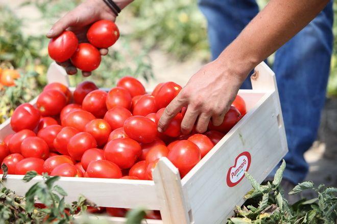 Unilever: Φέρνει την παραγωγή του Lux στην Ελλάδα