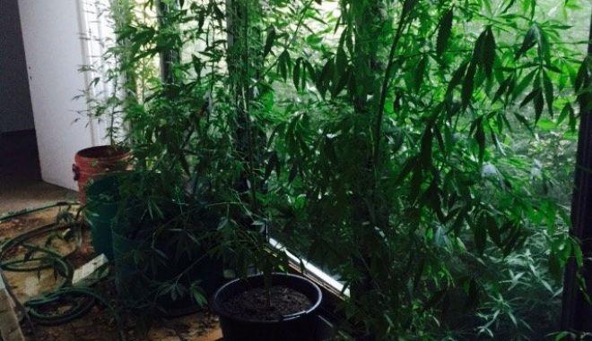 Δημιούργησαν υπερσύγχρονη μονάδα καλλιέργειας «σκανκ» στο Μαρμάρι της Εύβοιας [photos]