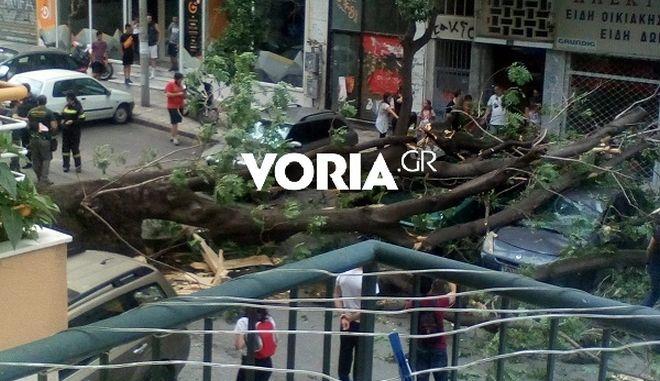 """Πτώση δέντρου στο κέντρο της Θεσσαλονίκης - """"Πλάκωσε"""" δύο οχήματα"""