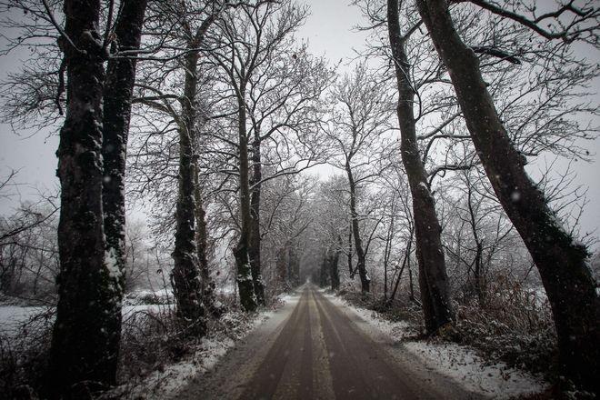 Δρόμος περνά μέσα από χιονισμένα πλατάνια στα Τρίκαλα