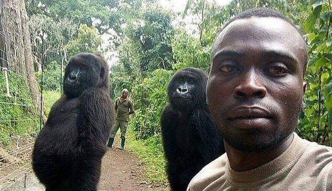 Δασοφύλακες και γορίλες ποζάρουν για selfie