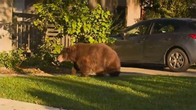 Αρκούδα στην είσοδο αυλής σε σπίτι στην Καλιφόρνια.