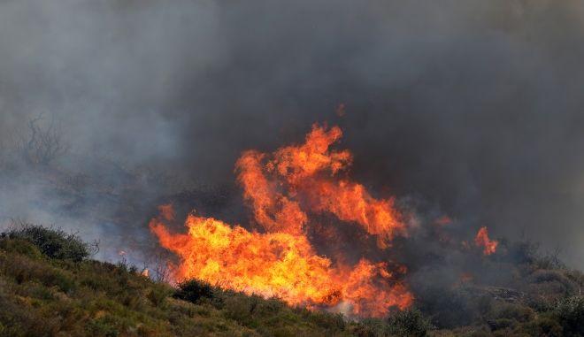Φωτιά σε δασική έκταση