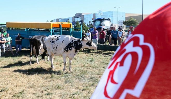 French farmers gather in front of Lactalis headquarters in Laval, western France, Tuesday, Aug. 23, 2016. French farmers are occupying an intersection outside the headquarters of dairy giant Lactalis and crying for help as they struggle to compete with cheaper countries in Europe's single market. A glut of milk and diving dairy prices are forcing French farms to sell below cost. Farmers' unions want big companies to pay more for milk than current market prices, to keep French agriculture alive. (AP Photo/David Vincent)