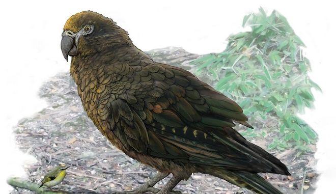 """""""Ηρακλής ο Απρόσμενος"""": Ο μεγαλύτερος παπαγάλος που υπήρξε ποτέ"""