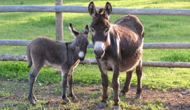 diaforetiko.gr : smallest animals23 Εκπληκτικές Φωτογραφίες: Ζώα μινιατούρες. Και όμως υπάρχουν!