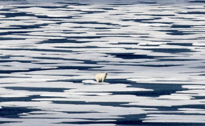 Πολική αρκούδα σε λιωμένο κομμάτι πάγου στην Αρκτική.
