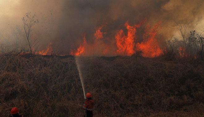 Βολιβία: Τουλάχιστον 2,3 εκατ. άγρια ζώα πέθαναν στις πυρκαγιές