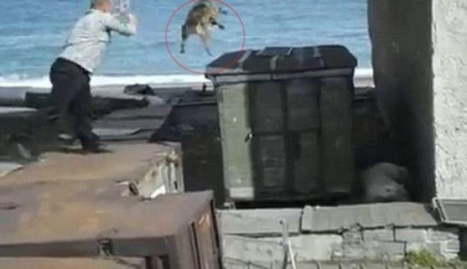 Φρικιαστικό βίντεο: Πετάει ζωντανό έναν σκύλο στα δόντια πολικής αρκούδας