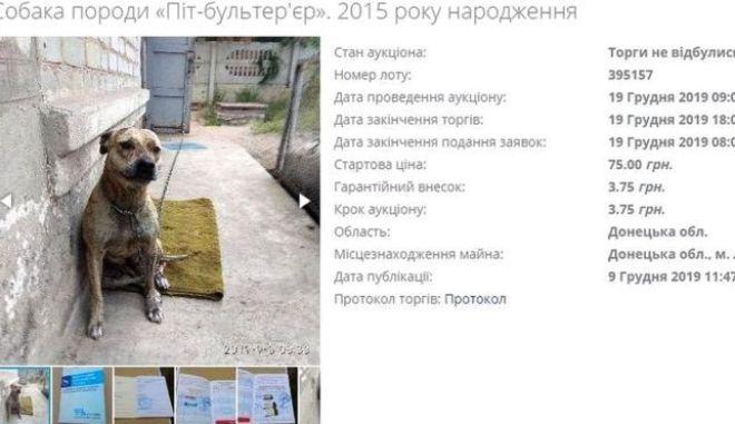To ένα από τα δύο σκυλιά που δημοπρατήθηκαν λόγω χρεών του ιδιοκτήτη τους