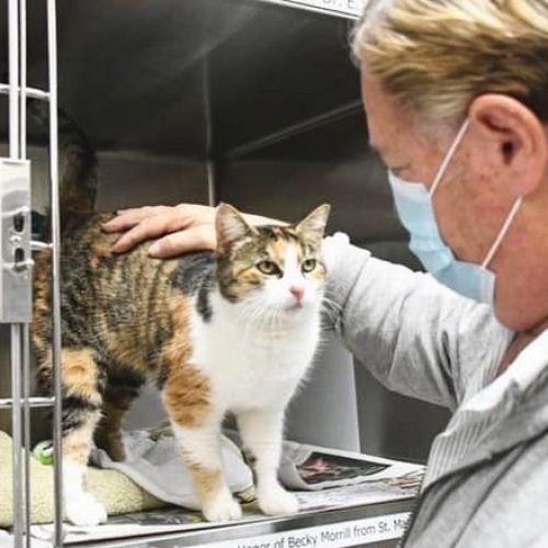 """Εξάψυχη -πλέον- γάτα εμφανίστηκε τρία χρόνια μετά τον """"θάνατό"""" της"""