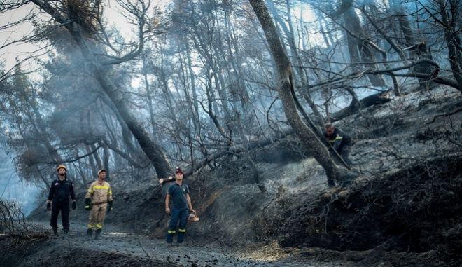 Πυροσβέστες στο καμένο δάσος στην Εύβοια