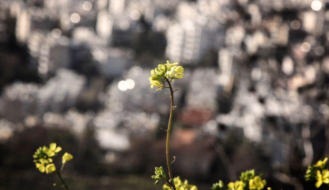 Πρώτη ημέρα της Άνοιξης με φόντο την Αθήνα. Φωτογραφίες από το βουνό του Υμηττού από την περιοχή του Καρέα (EUROKINISSI/ΣΩΤΗΡΗΣ ΔΗΜΗΤΡΟΠΟΥΛΟΣ)