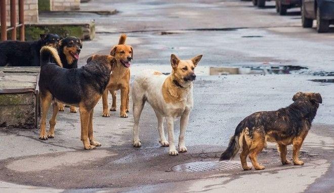 Θεσσαλονίκη: Σε σοβαρή κατάσταση 65χρονος που δέχθηκε επίθεση από αδέσποτα σκυλιά