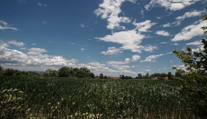 Σύννεφα στον ουρανό πάνω από καλλιέργεια καλαμποκιού σε περιοχή του νομού Τρικάλων. (EUROKINISSI/ΘΑΝΑΣΗΣ ΚΑΛΛΙΑΡΑΣ)