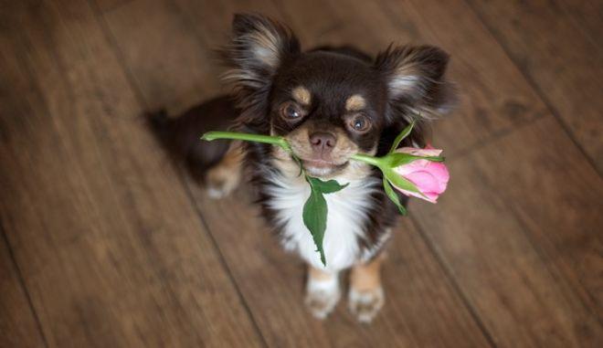 Έτσι ζητά συγγνώμη ο σκύλος σας