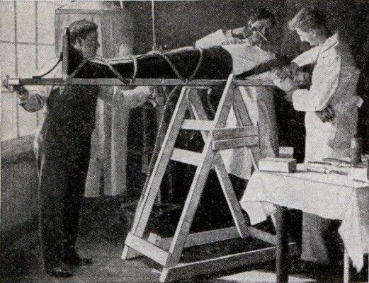 Μηχανή του Χρόνου: Ο επιστήμονας που θανάτωσε και επανέφερε στη ζωή δύο σκύλους!