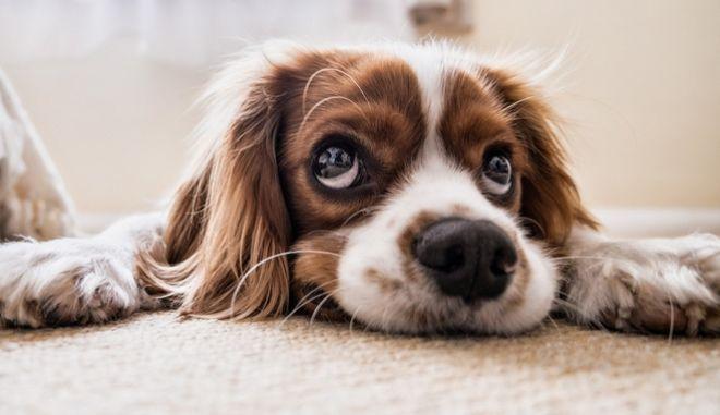 Φωτογραφία σκύλου